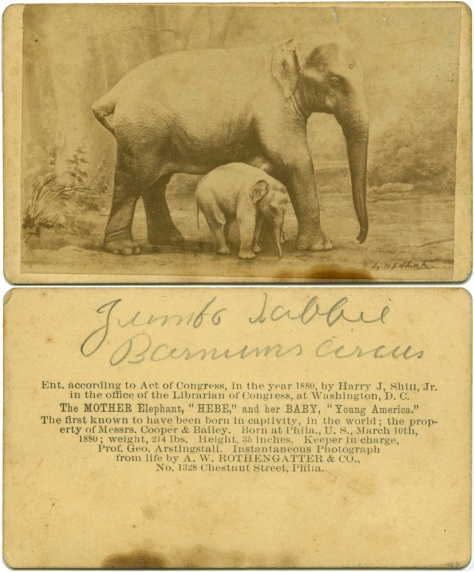 "Hebe the elephant and ""Young America"" her baby"