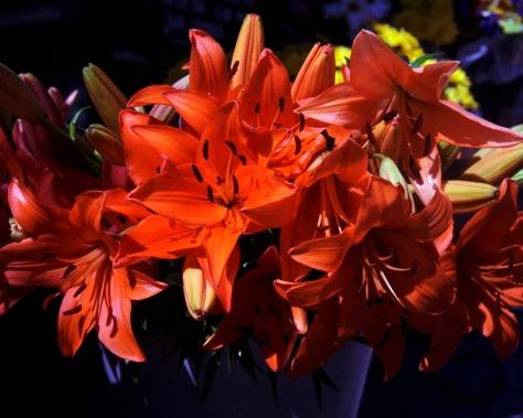 Flowers #2, Rolleinar 1