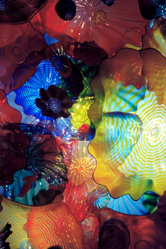 Ceiling, Chihuly Exhibit, Richmond, VA
