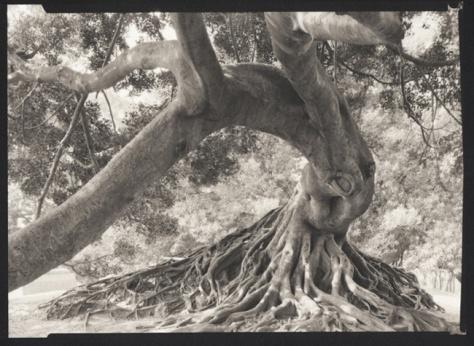 Ficus, Recoleta, Buenos Aires
