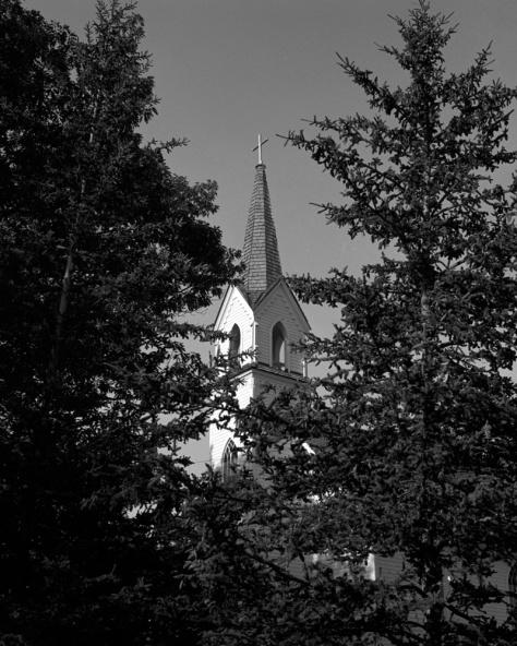 St Ignatius, Trees