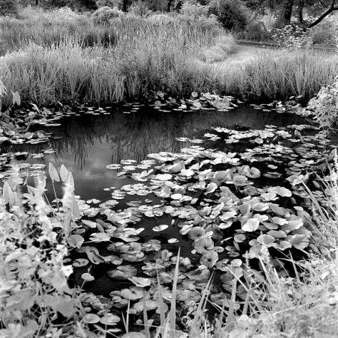 Lily Pond, Kenilworth Gardens
