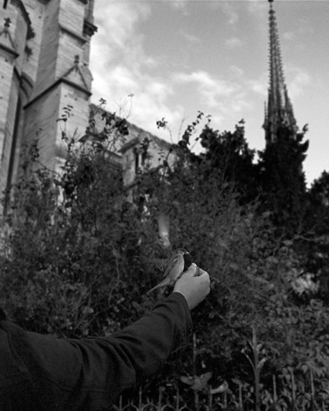 Feeding Sparrows, Notre Dame