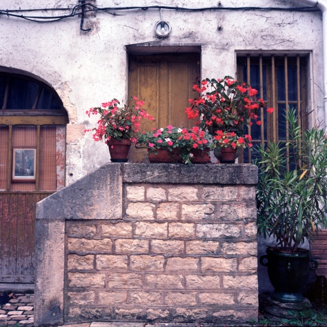 Geraniums, Stairs, Courtyard, Chalon