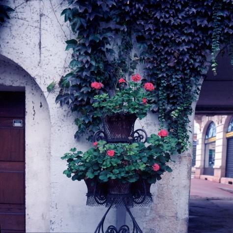 Geraniums, Doors, Courtyard, Chalon