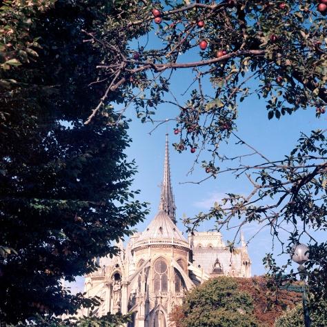 Notre Dame, Apple Tree