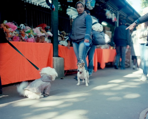 Parisian Puppy Confrontation
