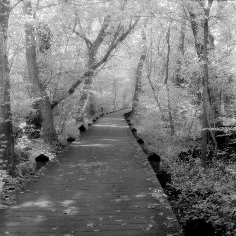 Boardwalk Path, Teddy Roosevelt Island