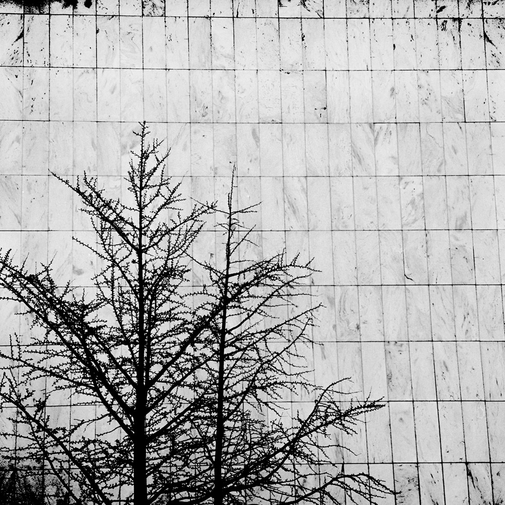 Tree, Stone Wall