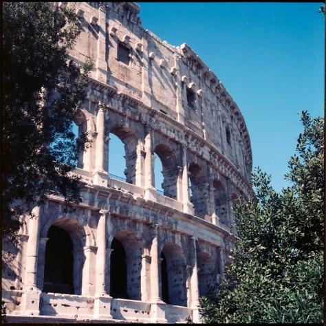 Colosseum Exterior, Trees