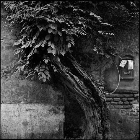 Tree, Mailbox, Trastevere