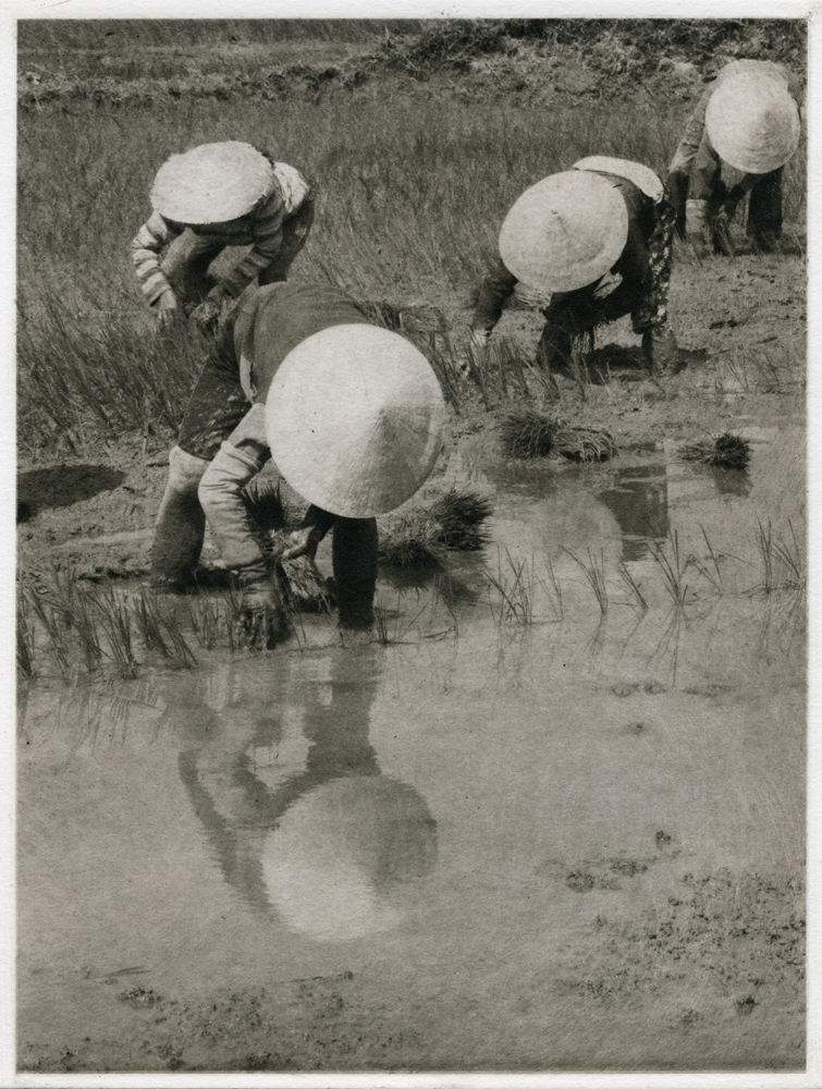 Planting Rice, by Barbara Maloney