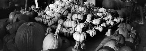 PumpkinsWholeFoodsGW617